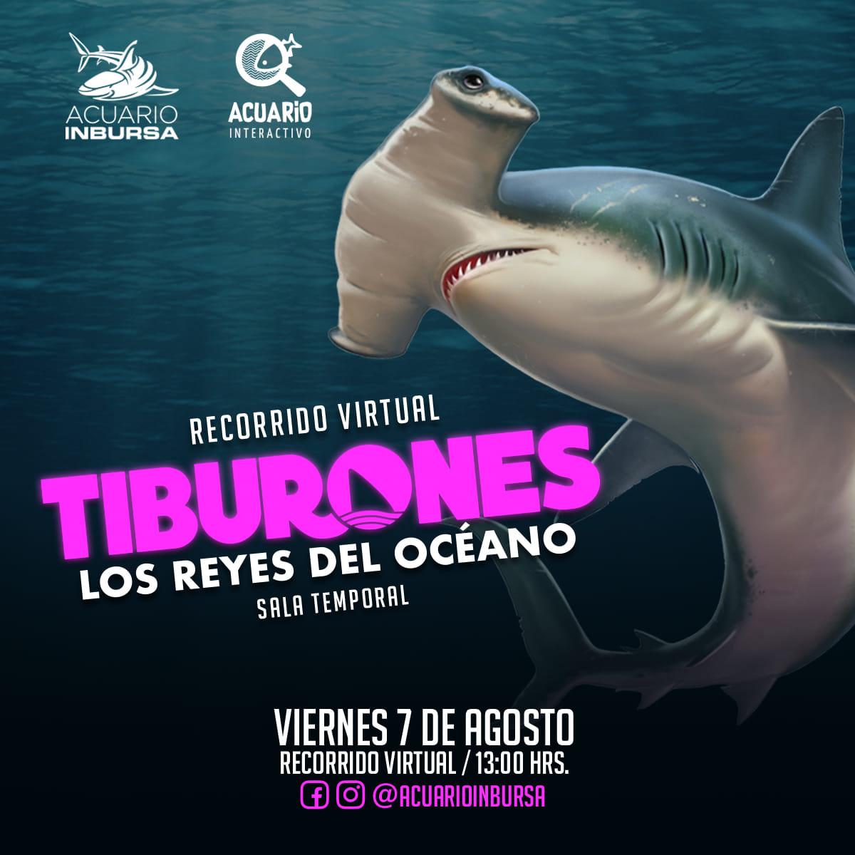 ¡Los Reyes del Océano Estarán Totalmente En Vivo!